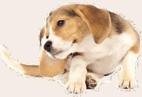 flea extermination for pets