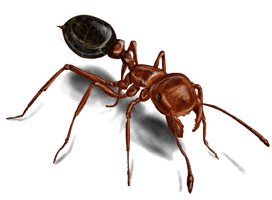Fire Ant Control in Charleston, SC