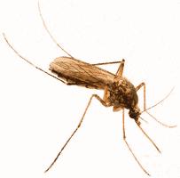 mosquito control service charleston