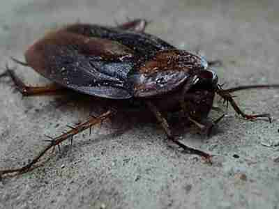 Cockroach Prevent: 17 Tips