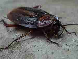 cockroach-17-tips-prevent Charleston