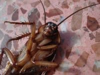 winter-fall-cockroach-tips